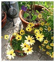 Sommerblumen sollten erst nach den Eisheiligen ins Freie
