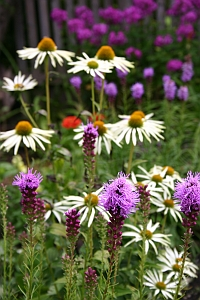 Gartentipps und Gartenblogs