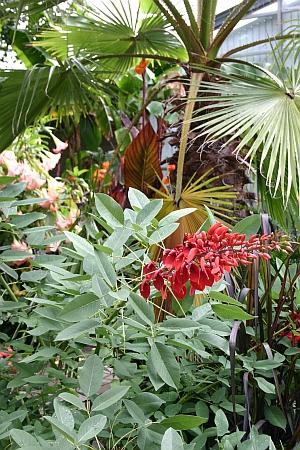 Für Kübelpflanzen muss rechtzeitig ein Überwinterungsplatz gefunden werden