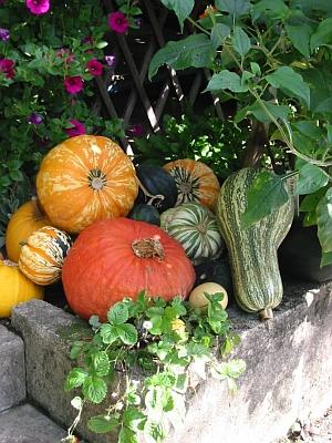 Herbstzeit ist Erntezeit und Vorbereitungszeit