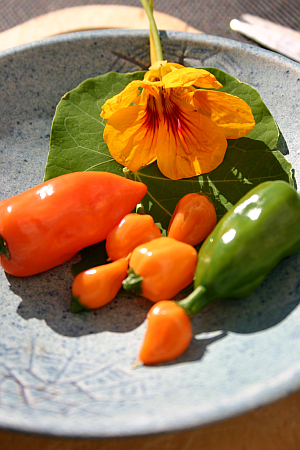 Besondere Chili-Sorten gibt es nur bei eigenem Anbau.