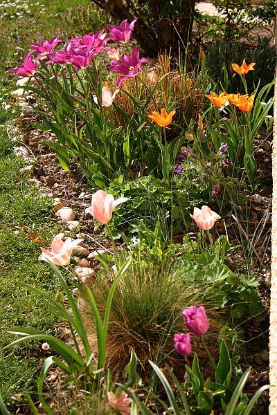 Gartenglück mit Tulpen