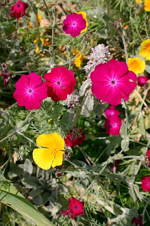Gartentrends 2016 - der Garten wird bunt - Trendfarbe Gelb