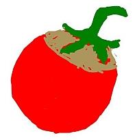 Tomatenfrucht mit Grünkragen