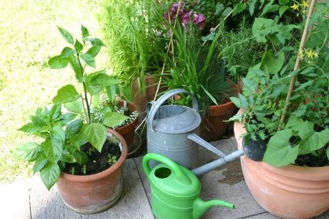 Gärtnern tut der Seele gut