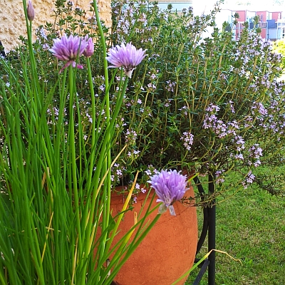 Mehrere Gartentrends vereint auf kleinem Raum: Urban Gardening, Selbstversorgung, essbare Blüten, Nützlinge fördern