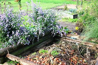 Gartenabfälle werden über die Kompostierung zu einem wertvollem Bodenverbesserer und Dünger