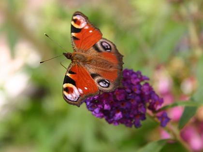 Gartentrend: Bienen, Schmetterlinge, Vögel und andere Tiere fördern.