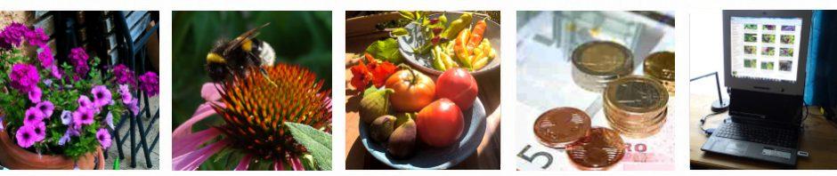 tinto bloggt über Garten, Pflanzen, Ökologie, Geld, Weiterbildung, Beauty, Gesundheit, Internettrends, Informatik und mehr