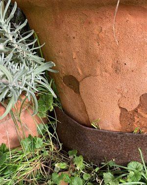 Frostschaden im unteren Topfbereich verdeckt durch Rasenkantenblech aus verrostetem Cortenstahl.