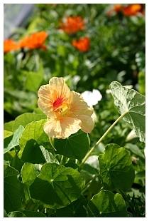 Garten-Glück